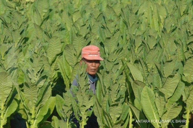 Komoditas tembakau penggerak ekonomi Rembang