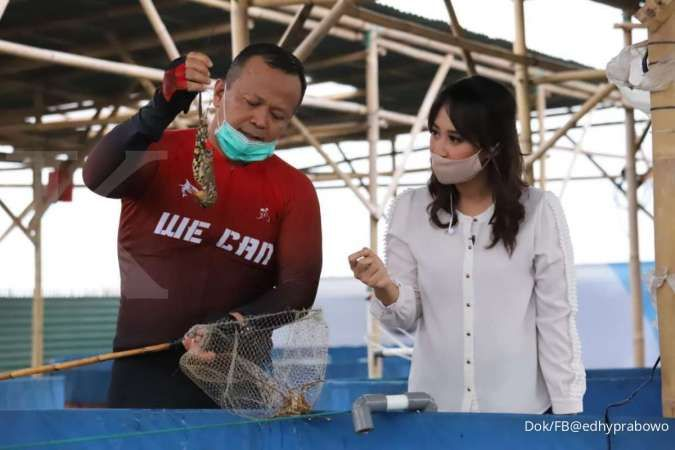 KKP lepaskan 31.065 ekor benih lobster hasil tangkapan upaya penyelundupan