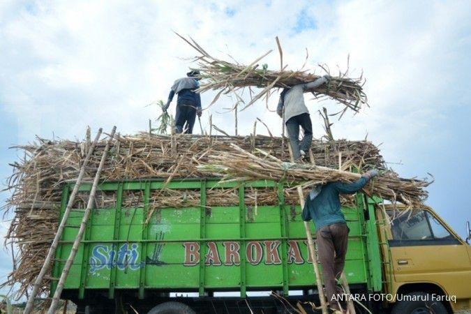 Pabrik gula Rejoso Manis Indo targetkan produksi hingga 20.00 TCD per pekan