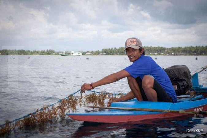 Berpotensi ungkit ekonomi nasional, KKP dorong pengembangan rumput laut