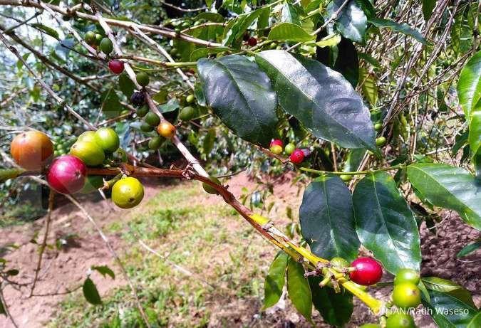 Pandemi berdampak pada rantai pasokan, begini pertahanan industri kopi