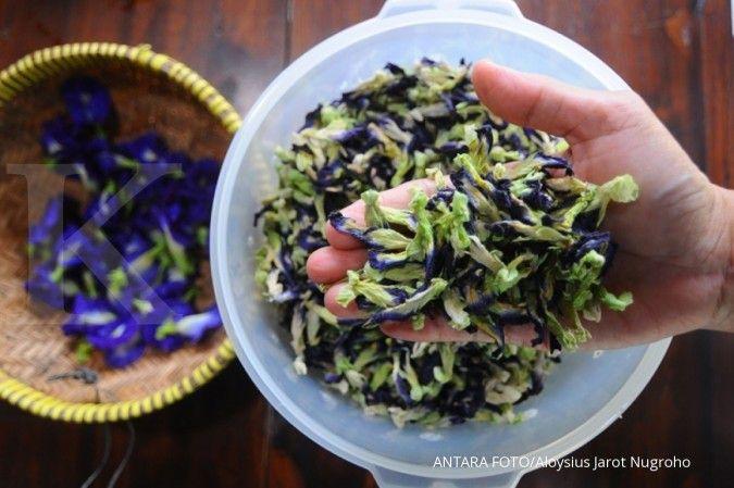 Bunga telang bermanfaat sebagai obat herbal bronkitis sampai bisul