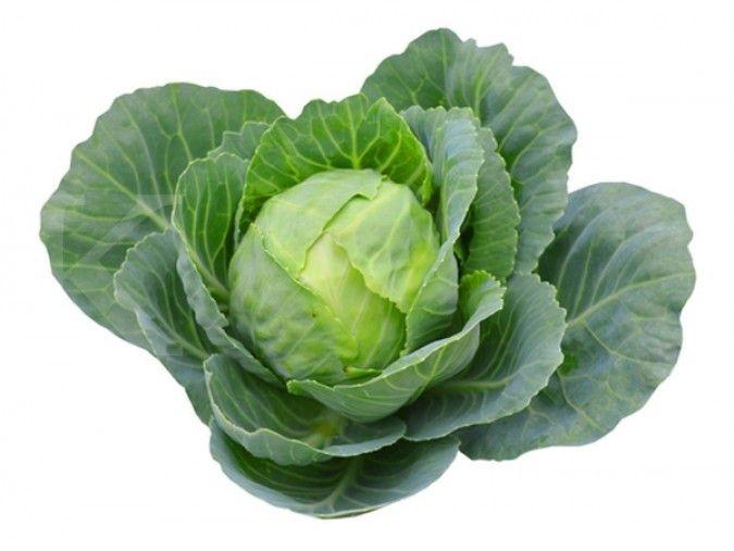 Ternyata, sayur kubis ampuh cegah penyakit kanker
