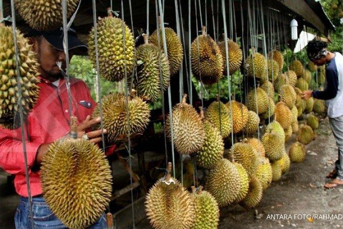 Tak hanya enak, durian atasi disfungsi seksua