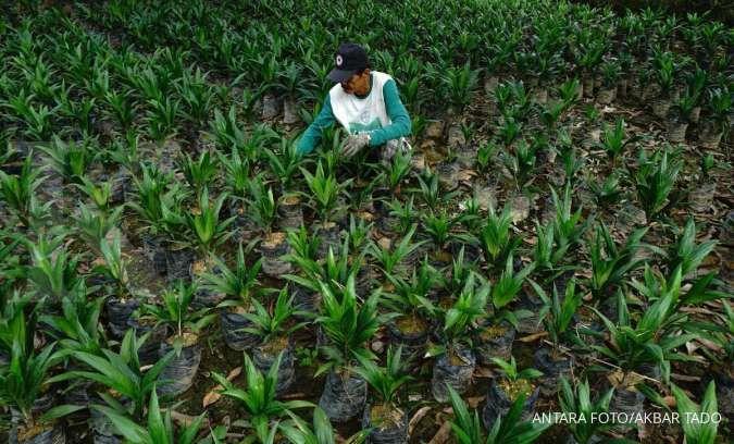 Upaya memperkuat kelembagaan petani kelapa sawit di Indonesia