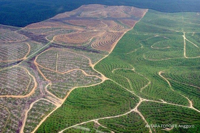 Kementan menyetujui kelanjutan moratorium sawit