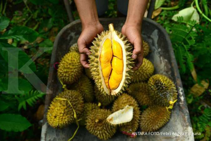 Sop Durian