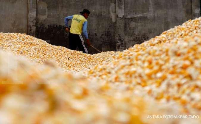 Bisnis poultry penuh gejolak, simak rekomendasi saham sektor ini