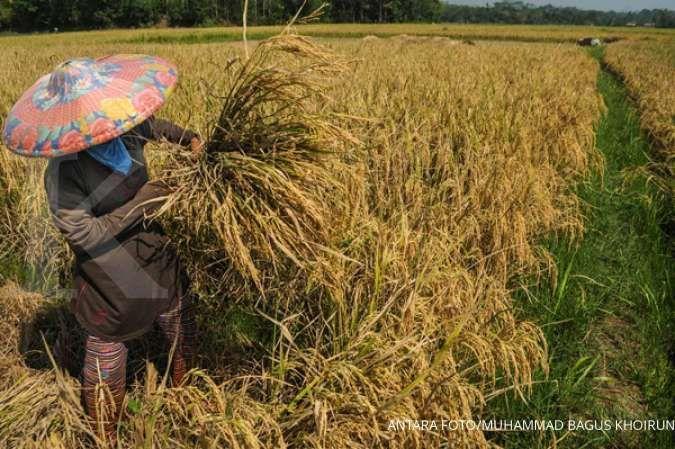 Target Kementan produksi 3 juta ton beras per bulan dinilai sulit tercapai