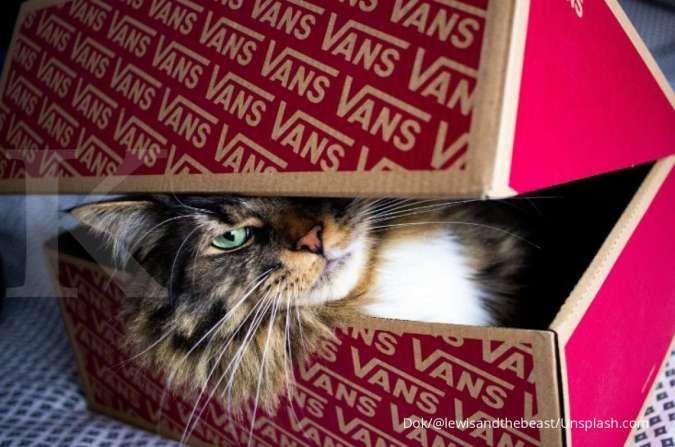 6 Alasan kucing suka masuk ke dalam kardus, bukan hanya untuk tempat sembunyi