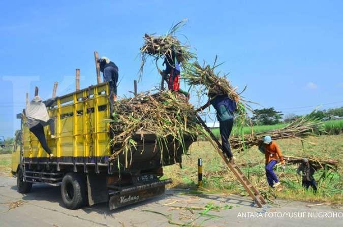 RNI menjamin harga minimal offtake gula petani tebu Rp 10.500 per kilogram