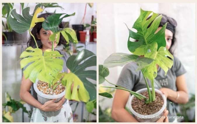 Bisa jadi pengganti pupuk, ini 5 manfaat vetsin untuk tanaman