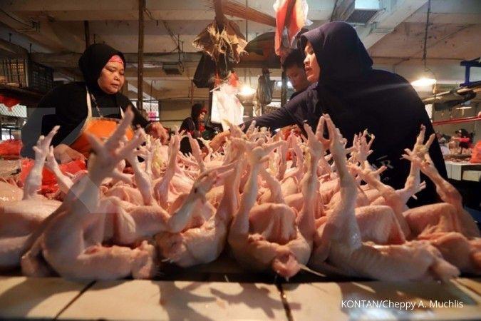 Berapa harga ayam broiler hari ini? Harga semakin naik ketimbang sebulan lalu