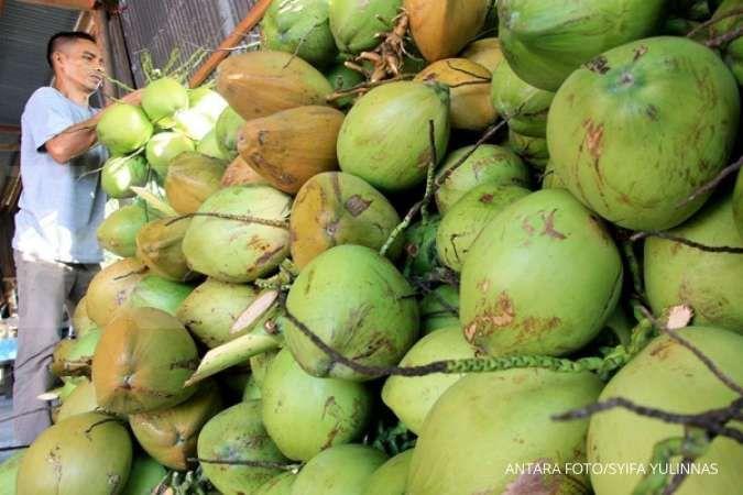 Buah kelapa muda