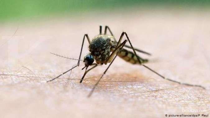 Beberapa gejala malaria yang biasa dialami seseorang adalah demam tinggi dan tubuh menggigil.