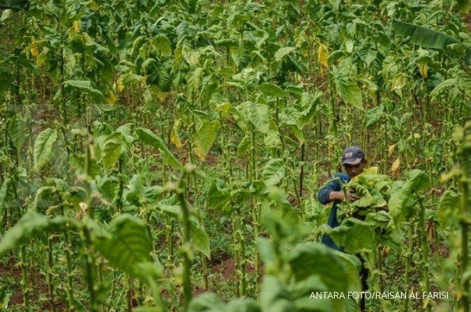 APTI sebut revisi PP 109 rugikan petani
