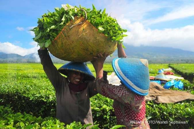 Kerjasama dengan Starbucks, PTPN III ekspor perdana teh ke AS