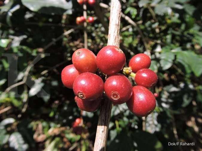 Scopi: Dalam 30 tahun mendatang kopi akan menjadi komoditas langka