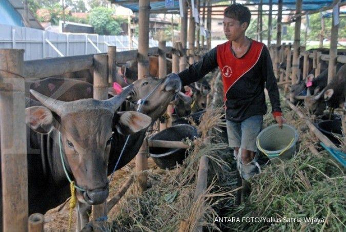Kemtan usul peternak sapi dapat KUR bunga 4%