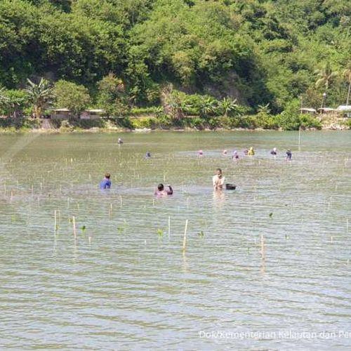 Tanam 50.000 Bibit Mangrove, KKP Rehabilitasi Pesisir Lombok Barat