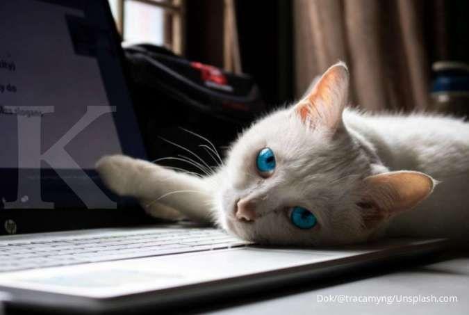 Kenapa kucing senang duduk di atas keyboard laptop atau buku Anda? Ini alasannya