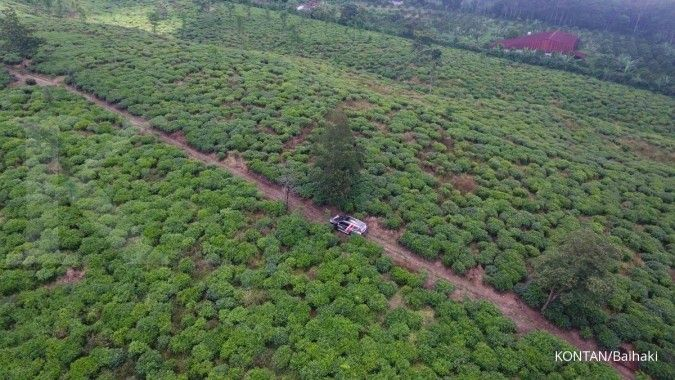 Jelajah Ekonomi Kontan (hari ke 6): Menyusuri kebun teh, apel, jeruk di Batu & Malang