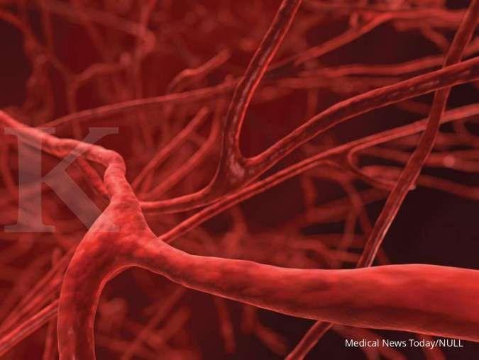 Mengenal jenis-jenis pembuluh darah manusia beserta fungsinya