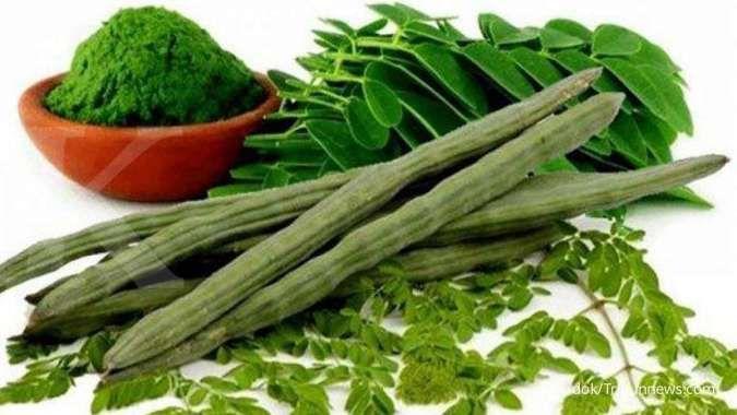 Salah satu manfaat daun kelor adalah mengatasi anemia.