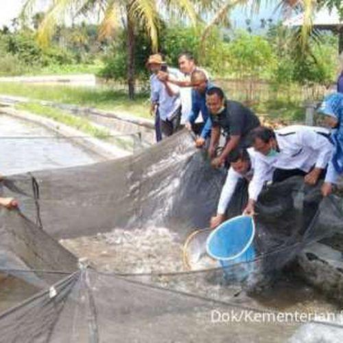 Kerja Sama Riset Wujudkan Pasaman Sebagai Sentra Ikan Air Tawar di Sumatera
