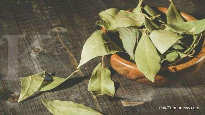 Cara mengusir kecoa bisa pakai daun salam.
