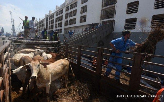 Konsumsi tinggi, Indonesia masih butuh impor sapi