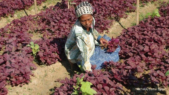One of the benefits of red spinach is maintaining your kidney function.
