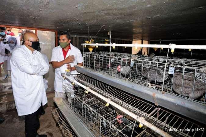 Teten Masduki ajak peternak ayam masuk koperasi agar usahanya capai skala bisnis