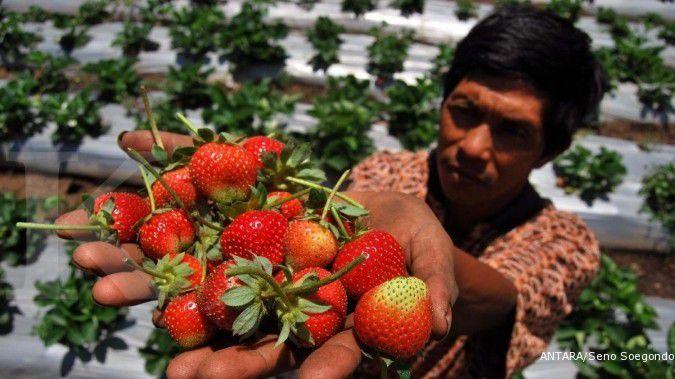 5 Kelompok makanan peningkat daya tahan tubuh yang perlu dikonsumsi di tengah pandemi
