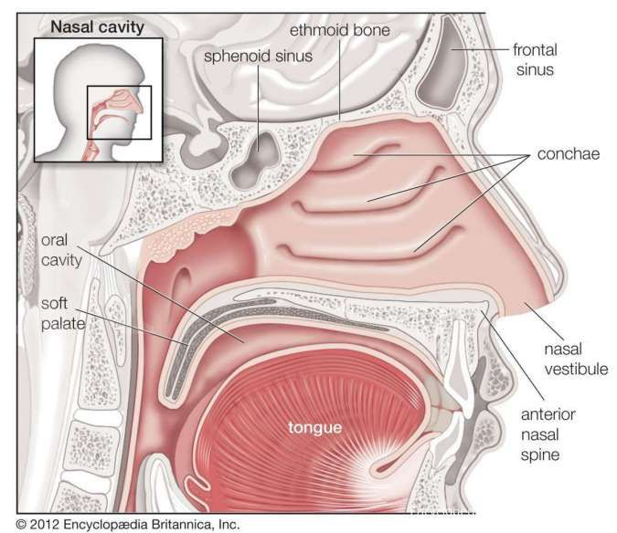 Apakah anosmia atau hilang penciuman bisa sembuh sendiri?