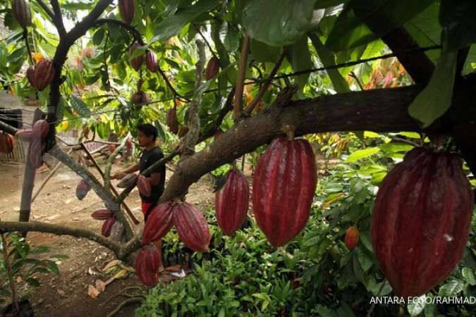 Ditjen Kekayaan Negara serahkelolaan aset Rp 6,1 triliun ke Pemkab Manokwari Selatan