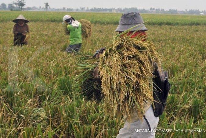 Petani Ngawi berhasil tingkatkan hasil panen di tengah pandemi