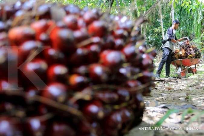Kemenaker upayakan kesejahteraan bagi pekerja sektor kelapa sawit
