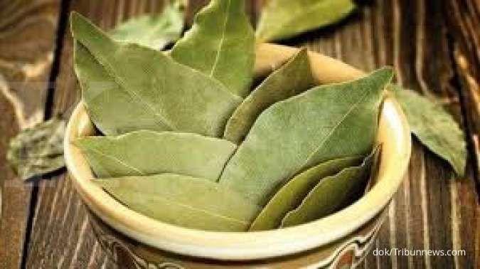 7 Manfaat daun salam sebagai obat herbal untuk radang lambung sampai stroke