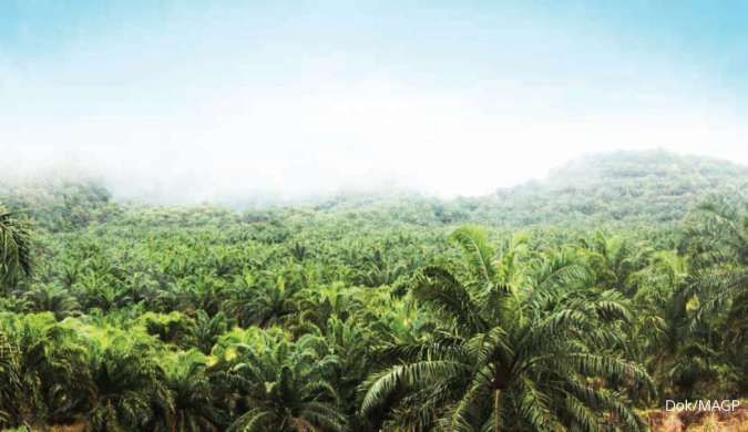 Multi Agro Gemilang Plantation (MAGP) akan bangun PKS di Kalimantan Barat