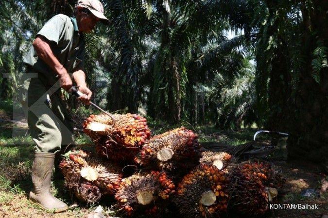 Kinerja Badan Pengelola Dana Perkebunan Kelapa Sawit tak terpengaruh pungutan ekspor