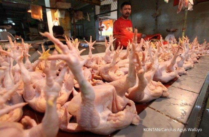 Harga ayam potong Rp 34.000/ekor jelang Natal