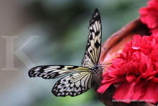 Jenis-jenis penyerbukan pada bunga dan pengertiannya