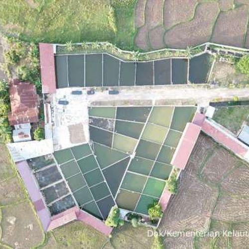 KKP: Sentra Budidaya Terintegrasi Hulu-hilir Ciptakan Lapangan Kerja dan Tingkatkan Pendapatan Masyarakat