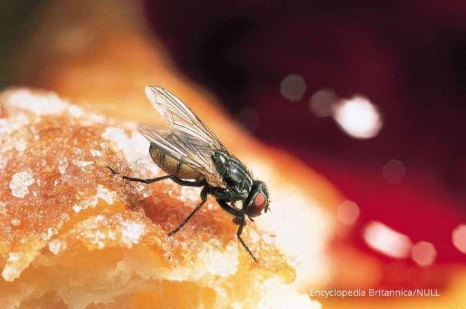 5 Cara mudah mengusir lalat dari rumah dengan bahan-bahan alami