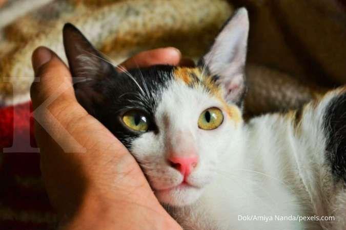 Seekor kucing peliharaan di Seoul positif Covid-19