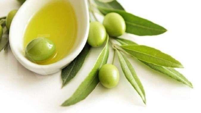 Minum teh daun zaitun secara rutin bisa menurunkan asam urat tinggi