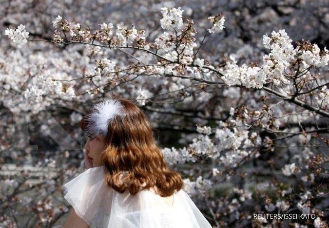 Taman bunga sakura akan segera hadir di Jakarta Timur, begini konsepnya