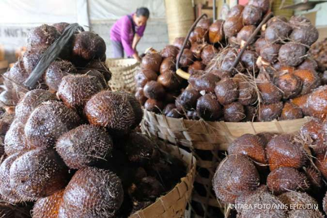 One of the benefits of salak fruit is that it can reduce your weight.