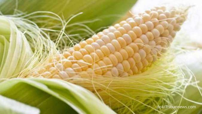 Tidak hanya menurunkan asam urat tinggi, ini manfaat rambut jagung untuk kesehatan
